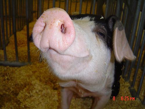 pork-kids.jpg